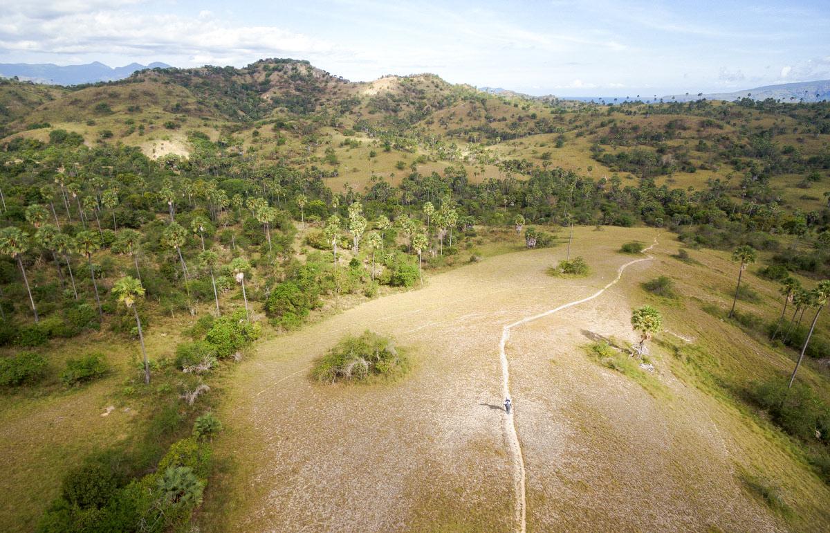 Hügel und Plamen zeichnen die Landschaft von Rinca Island