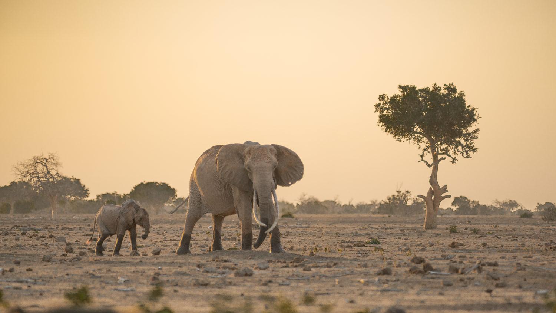 Elefanten vor dem Satao Camp