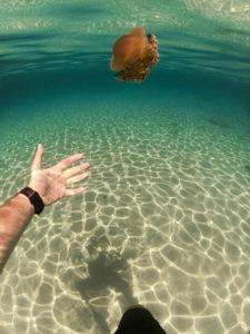 Schnorcheln auf Ibiza